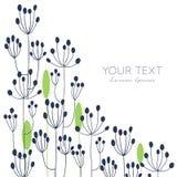 Cartão floral da erva-doce Imagens de Stock Royalty Free