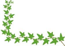 Cartão floral - hera Imagem de Stock Royalty Free
