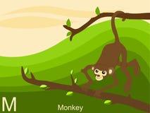 Cartão instantâneo do alfabeto animal, M para o macaco Fotografia de Stock