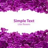 Cartão lilás violeta da beira Foto de Stock Royalty Free