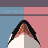 Cartão liso da baleia de assassino ilustração stock