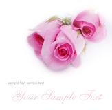 Cartão macio com rosas Foto de Stock Royalty Free