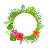 Cartão redondo com elementos tropicais da decoração Imagem de Stock Royalty Free