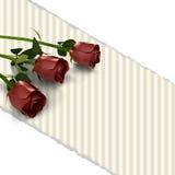 Cartão retro com rosas vermelhas e pape rasgado Fotografia de Stock