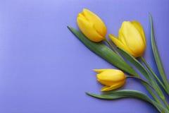 Cartão romântico das tulipas do dia de Valentim - foto conservada em estoque Imagens de Stock Royalty Free