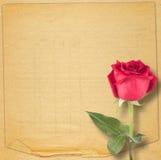 Cartão velho do vintage com uma rosa bonita do vermelho no papel Fotografia de Stock Royalty Free