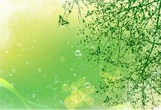 Cartão verde Imagens de Stock
