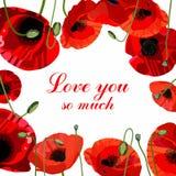 Cartão vermelho do dia do ` s do Valentim da papoila Imagens de Stock Royalty Free