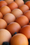 Cartón de huevos marrones frescos Foto de archivo libre de regalías
