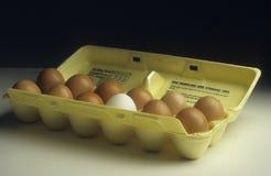 Cartón de huevos, uno cuyo no es el marrón blanco Foto de archivo