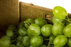 Cartón del primer de las uvas blancas Imagen de archivo libre de regalías