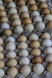 Cartón dos de huevos Foto de archivo