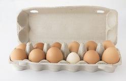Cartón, huevos, abiertos Fotografía de archivo