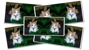 Cartões de Natal da árvore da pele imagem de stock