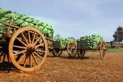 Cart of Cabbage Stock Photos
