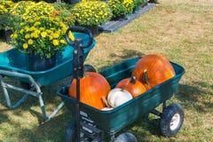 Cart with colorful pumpkins at pumpkin patch. Stock Photos
