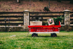 Cart containing the Christmas tree that has chosen. To take home for decorates for the holiday season Stock Photo