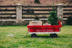 Cart containing the Christmas tree. That has chosen to take home for decorates for the holiday season Stock Image