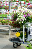 Cart of flowers at a local plant nursery Royalty Free Stock Photos