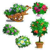 Cart with flowers, orange tree, roses and bouquets. Cart with flowers, orange tree, roses and few bouquets of wildflowers. Botanical set of five image. Vector Royalty Free Stock Photography