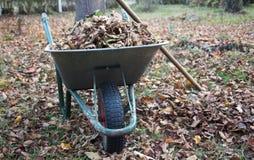 Wheelbarrow full of leaves stock photo