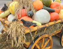 A cart with harvest pumpkin Stock Image