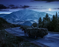 Cart with hay on the way to mountains at night. Cart with hay on the way to mountainous rural area through the spruce forest in Carpathians at night in full moon Royalty Free Stock Photography