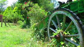 Cart Horse Carrier in Nature. Video stock video footage