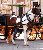Cart and horse, Spain Stock Photos