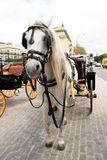 Cart and horse, Spain Royalty Free Stock Photography