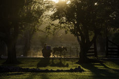 Cart and horse at sunset silhouetted among trees, cuba. A horse and cart are silhouetted on a tree lined dirt road, the raised dust catches the sunset afternoon Stock Images
