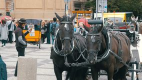 A cart with horses stand on Stare Mesto Square in Old Town, Prague, Czech Republic. CZECH REPUBLIC, PRAGUE, SEPTEMBER 12, 2017: A cart with horses stand on Stare stock video