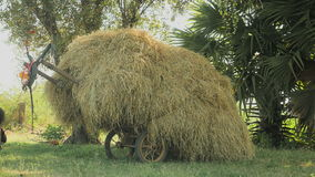 Cart overloaded with hay, horse cart, horse , carriage. Wood cart loaded with hay on a field stock video footage