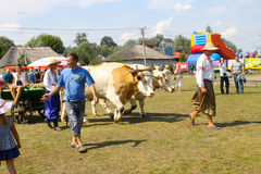Cart with oxes on Sorochyn fair. Velyki Sorochyntsi, Ukraine - August 20, 2016: Cart with oxes on Sorochyn fair stock image