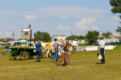 Cart with oxes on Sorochyn fair. Velyki Sorochyntsi, Ukraine - August 20, 2016: Cart with oxes on Sorochyn fair royalty free stock images