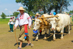 Cart with oxes on Sorochyn fair Royalty Free Stock Photos