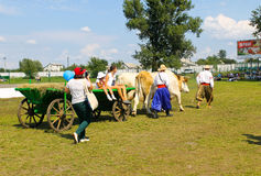 Cart with oxes on Sorochyn fair. Velyki Sorochyntsi, Ukraine - August 20, 2016: Cart with oxes on Sorochyn fair royalty free stock image