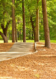 Cart Path Royalty Free Stock Photos