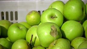 Cart por completo de manzanas después de escoger en una huerta CU almacen de video