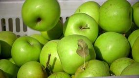 Cart por completo de manzanas después de escoger en una huerta CU metrajes