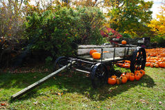 Cart of Pumpkins Stock Image