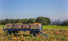 Cart with pumpkins in the field. Cart with harvested pumpkins in the field Stock Photography
