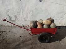 Cart with pumpkins stock images