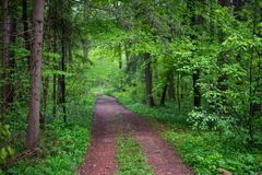 Cart road in a deep forest Royalty Free Stock Images