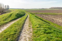 Cart track along a Dutch dike. Cart track along the dike of a Dutch nature reserve on the border of farmland. It is early in the morning of a sunny day in the Royalty Free Stock Image