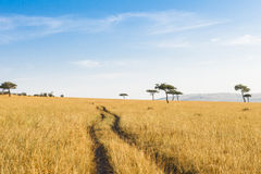 Cart track in the savanna Stock Photos