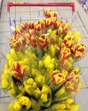 A Cart of Tulips Royalty Free Stock Image