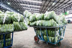 Cart use for wholesale vegetable market. Royalty Free Stock Image