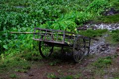 Cart Wagon left in a Muddy Field royalty free stock photography