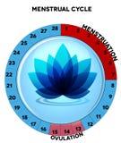 Carta azul del ciclo menstrual con la flor Foto de archivo libre de regalías
